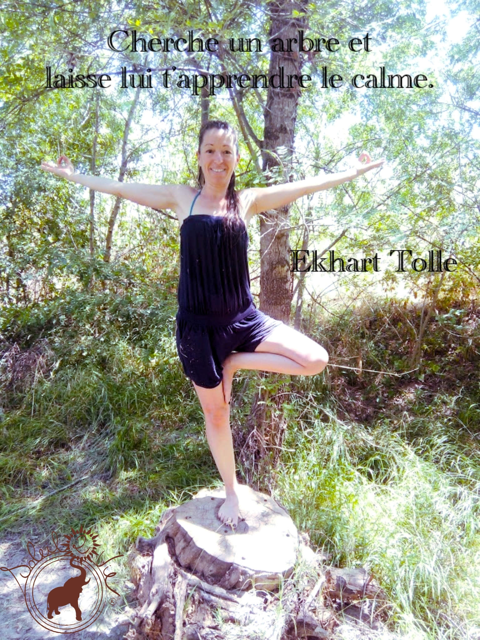 Cherche un arbre - Ekhart Tolle - soleil2vie